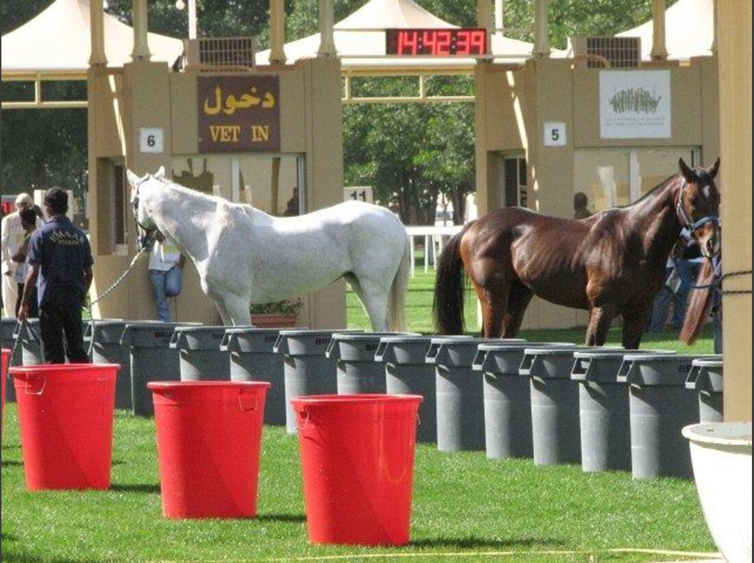 CAV Presidents Cup Abu Dhabi_05 (jpg)
