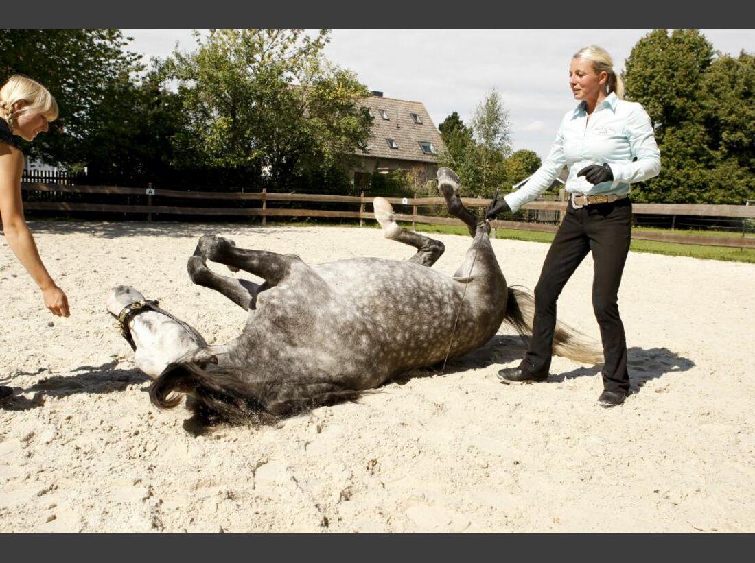 CAV Profi-Coaching Wünsche Schmale Zirkuslektionen-Wälzen