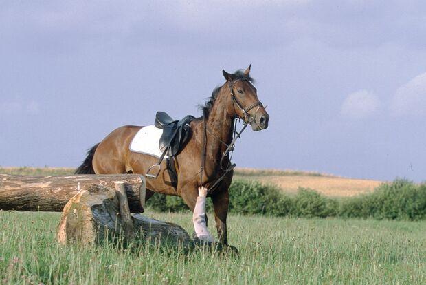 CAV Rechtserie Kaufvertrag-Vermittler Sturz Unfall Pferd 070809 (jpg)