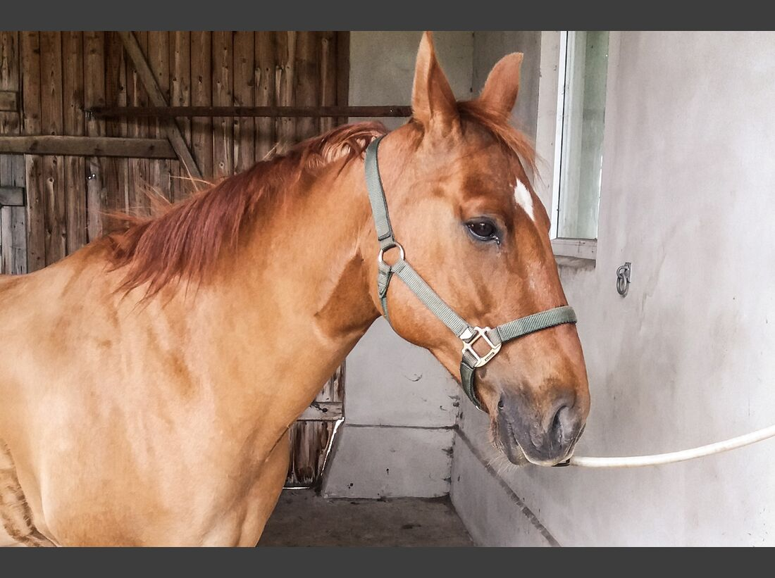 CAV Reitschultest Altmark Four Side Ranch 2