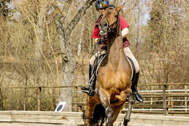 CAV Scheuendes Pferd Schreckhaftig