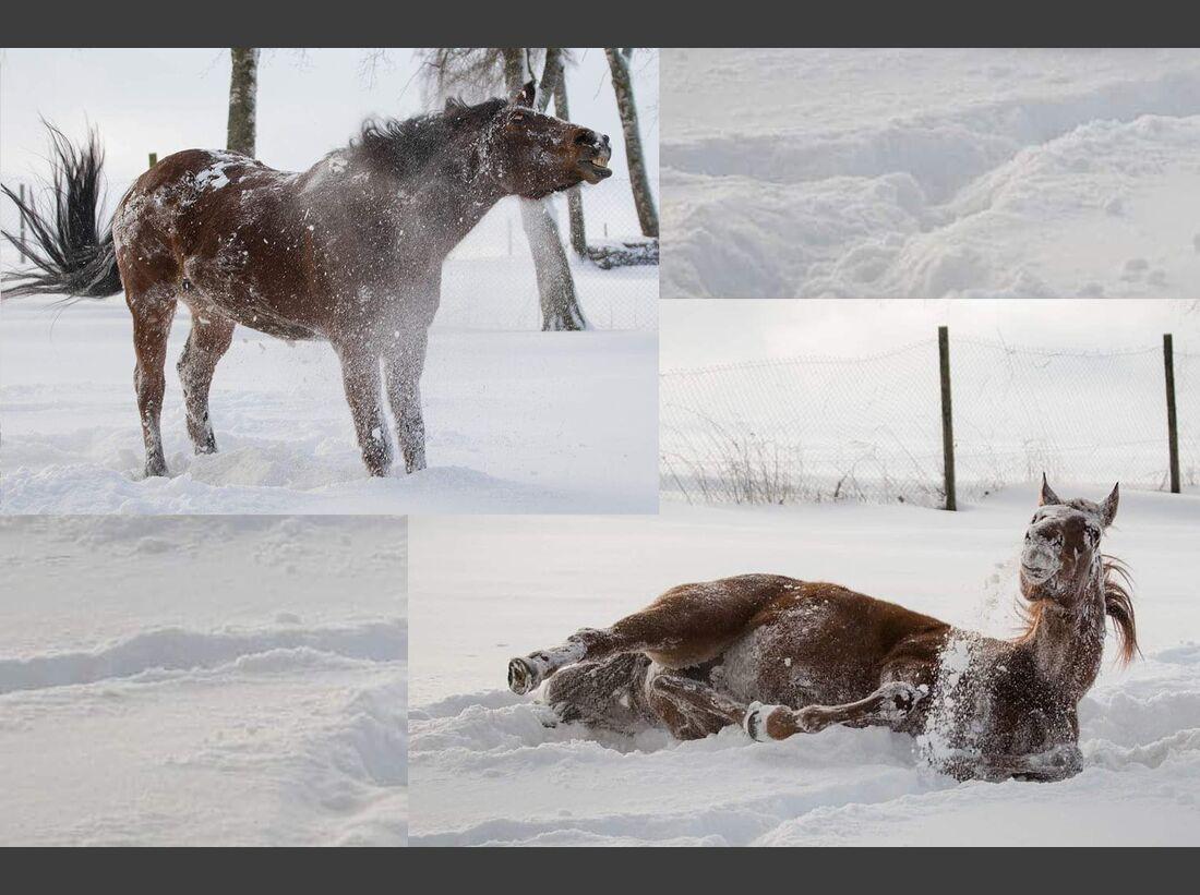CAV Schnee Winter Jenny Stemke