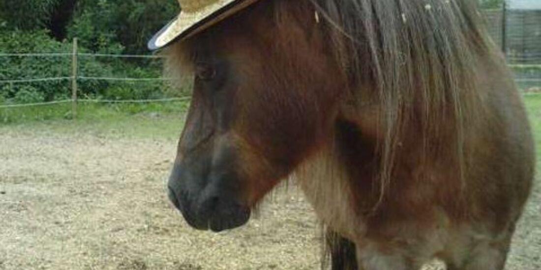 CAV Schräg Witzig Skuril aus der Pferdewelt Pferdefotos MS Shetty