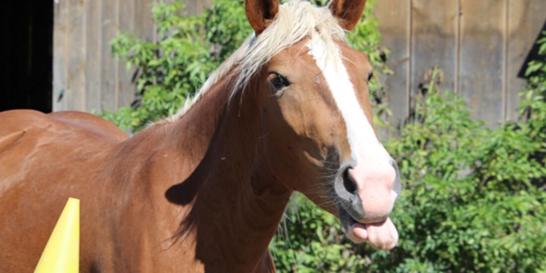 CAV Schräg Witzig Skurril aus der Pferdewelt Pferdefotos 3
