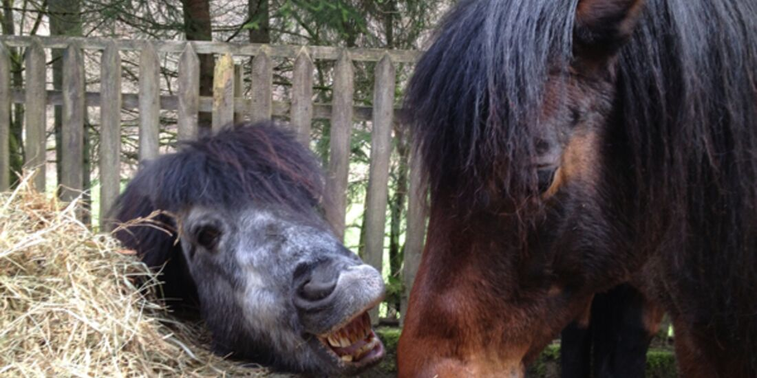CAV Schräg Witzig Skurril aus der Pferdewelt Pferdefotos 9