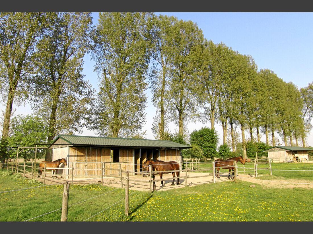 CAV Stall Scout Hahnenhof in Pulheim 3
