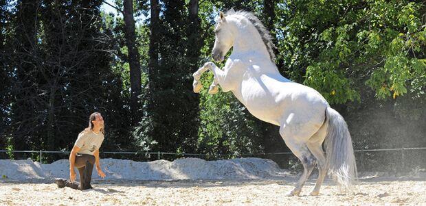 CAV Steigendes Pferd und Mann (nur 680er)
