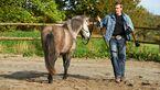 CAV Stimmung Horsemanship Florian Oberparleiter 4