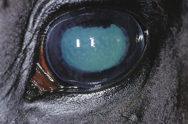 CAV Symptom-Lexikon Herpes