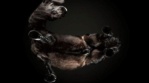 CAV Under Horses Underlook Andrius Burba Kopf verdreht