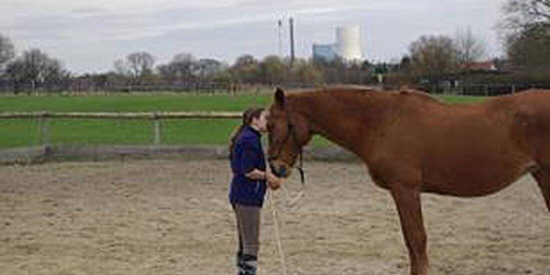 CAV Valentinstag Horselovers 1
