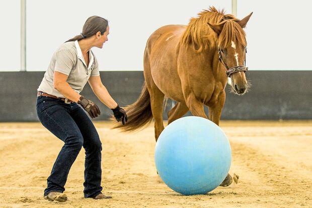 CAV Vivian Gabor mit Pferd Ball