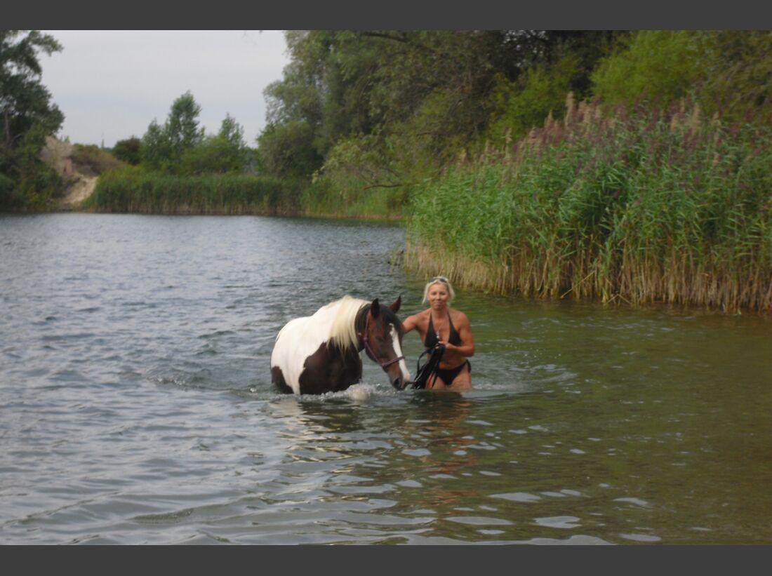 CAV Wasser Pferde baden Pamela Zwecker