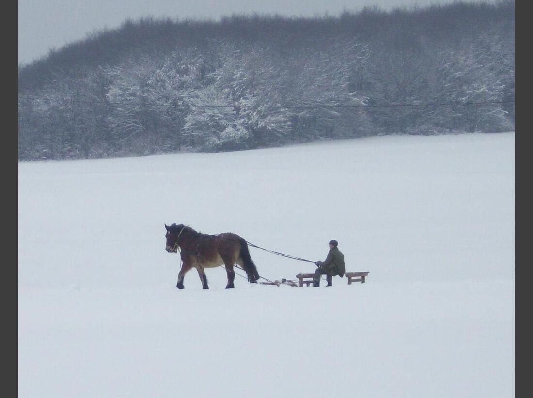 CAV Winter Pferdeschlitten Stute Gina