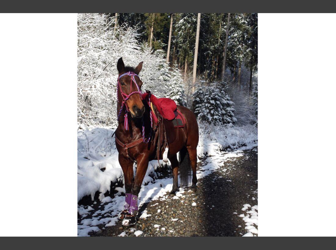 CAV Winterfotos Winter Schnee Katharina Hepp