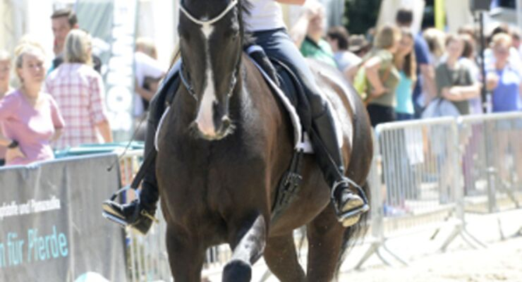 CAVALLO Academy 2015 - Andrea Bethge Video