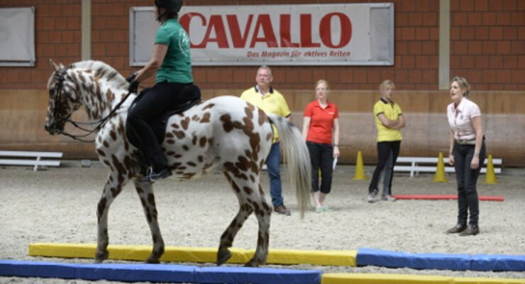 CAVALLO Academy 2015 - Equikinetic Video