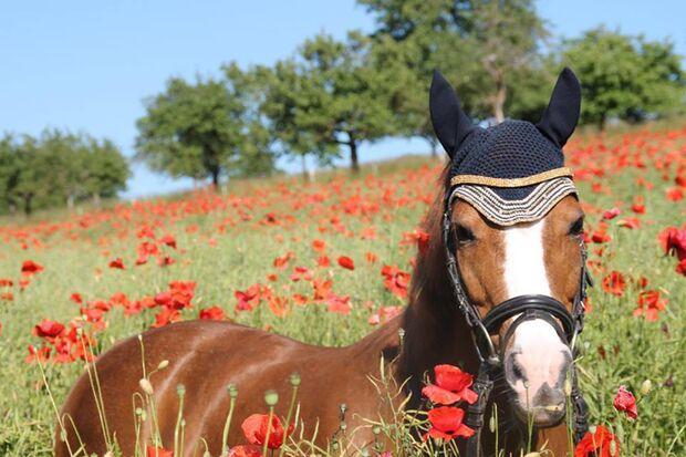 CAVALLO Leserfoto Fan-Pferd Mimi