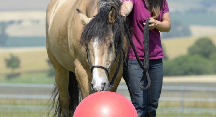 So wird Ihr Pferd ein Held
