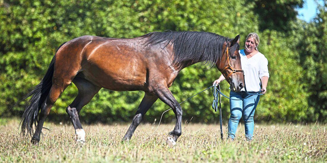 cav-201812-pferderassen-20180912-maremma-pferde-mit-TEASER-0389-hartig-v-amendo (jpg)