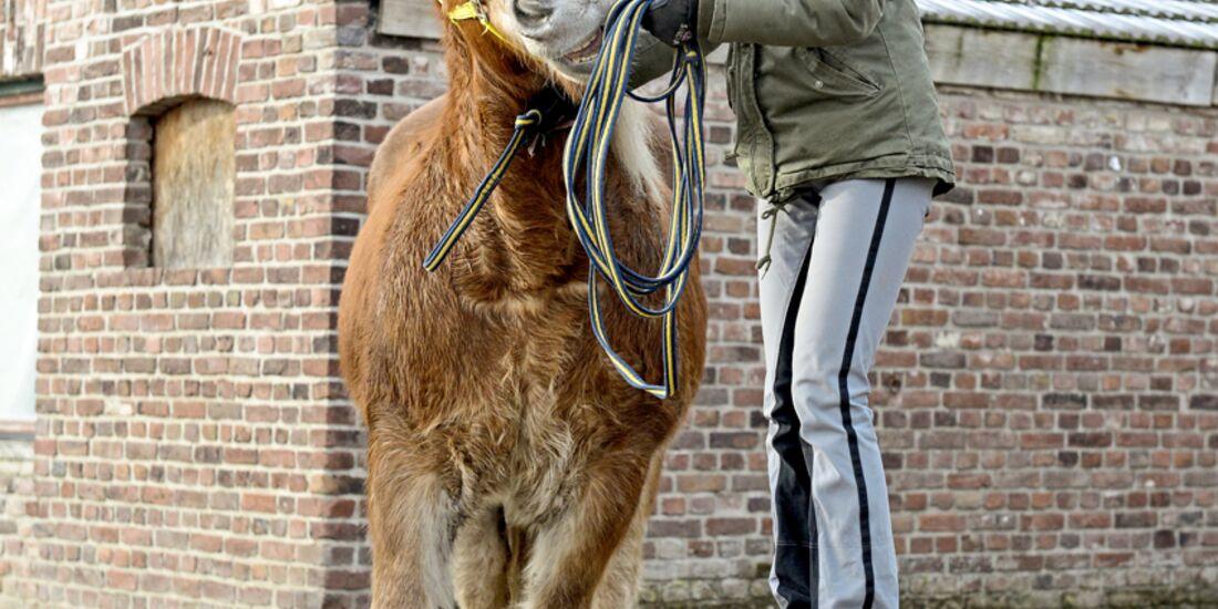 cav-201903-cavallo-coach-5-lir2303-v-amendo (jpg)