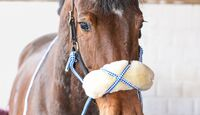 cav-201904-cavallo-coach-lir7545-v-amendo (jpg)