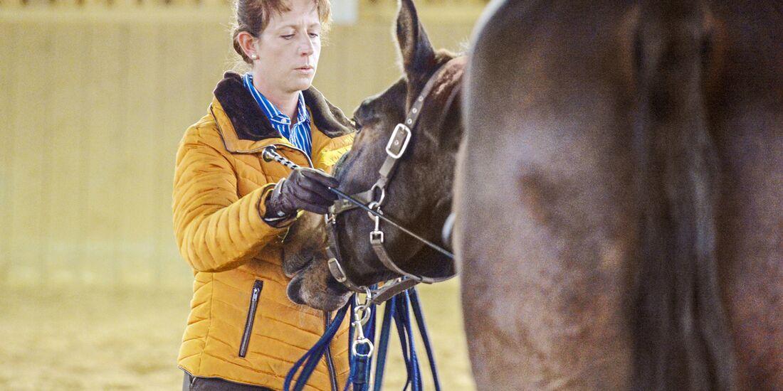 cav-201905-cavallo-coach-4-lir5431-v-amendo (jpg)