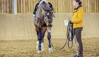 cav-201905-cavallo-coach-8-lir5583-v-amendo (jpg)
