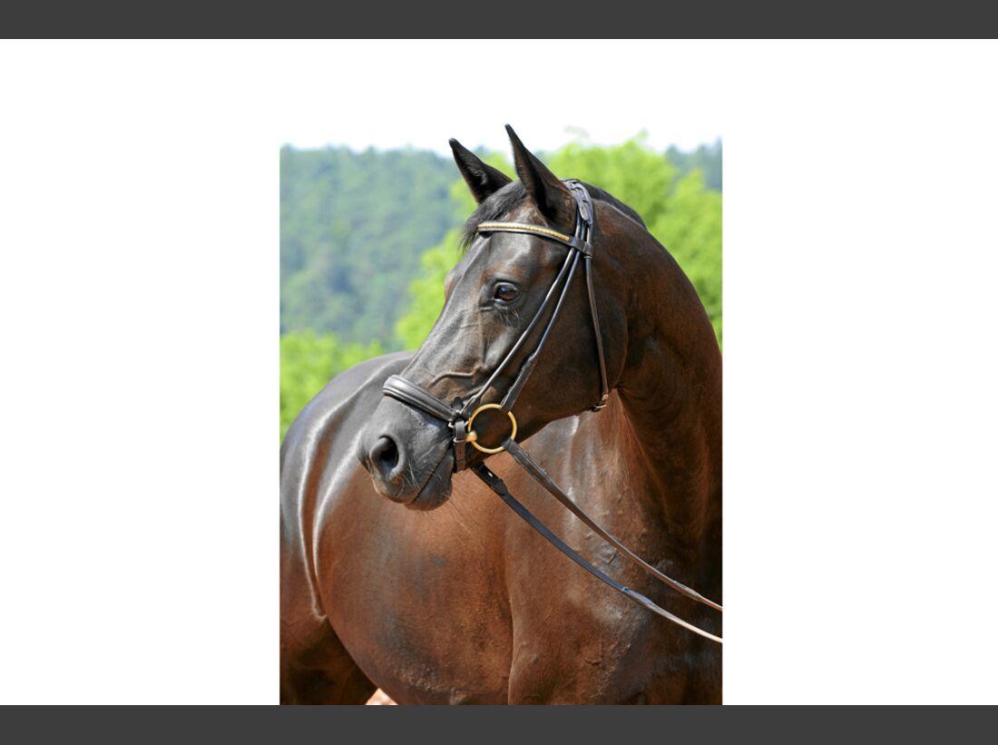 cav-pferde-fotografieren-1-lir4957 (jpg)