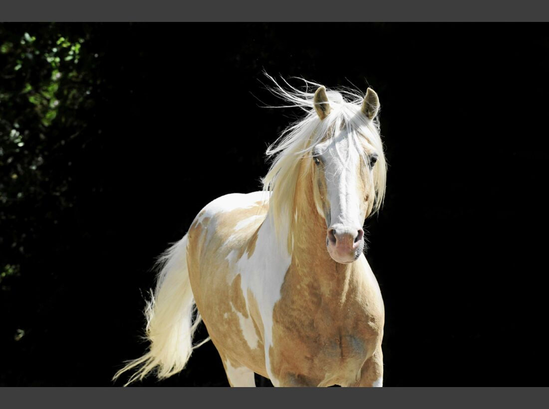 cav-pferde-fotografieren-2-lir1046 (jpg)
