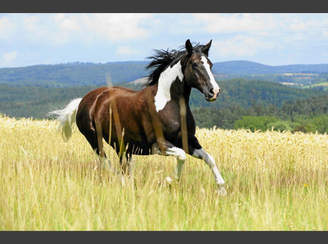 cav-pferde-fotografieren-2-lir1206 (jpg)