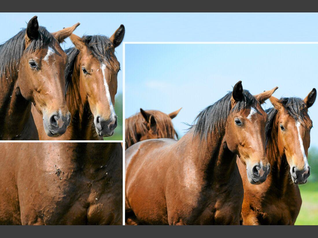 cav-pferde-fotografieren-3-lir4065-1 (jpg)