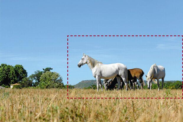 cav-pferde-fotografieren-3-lir4996 (jpg)