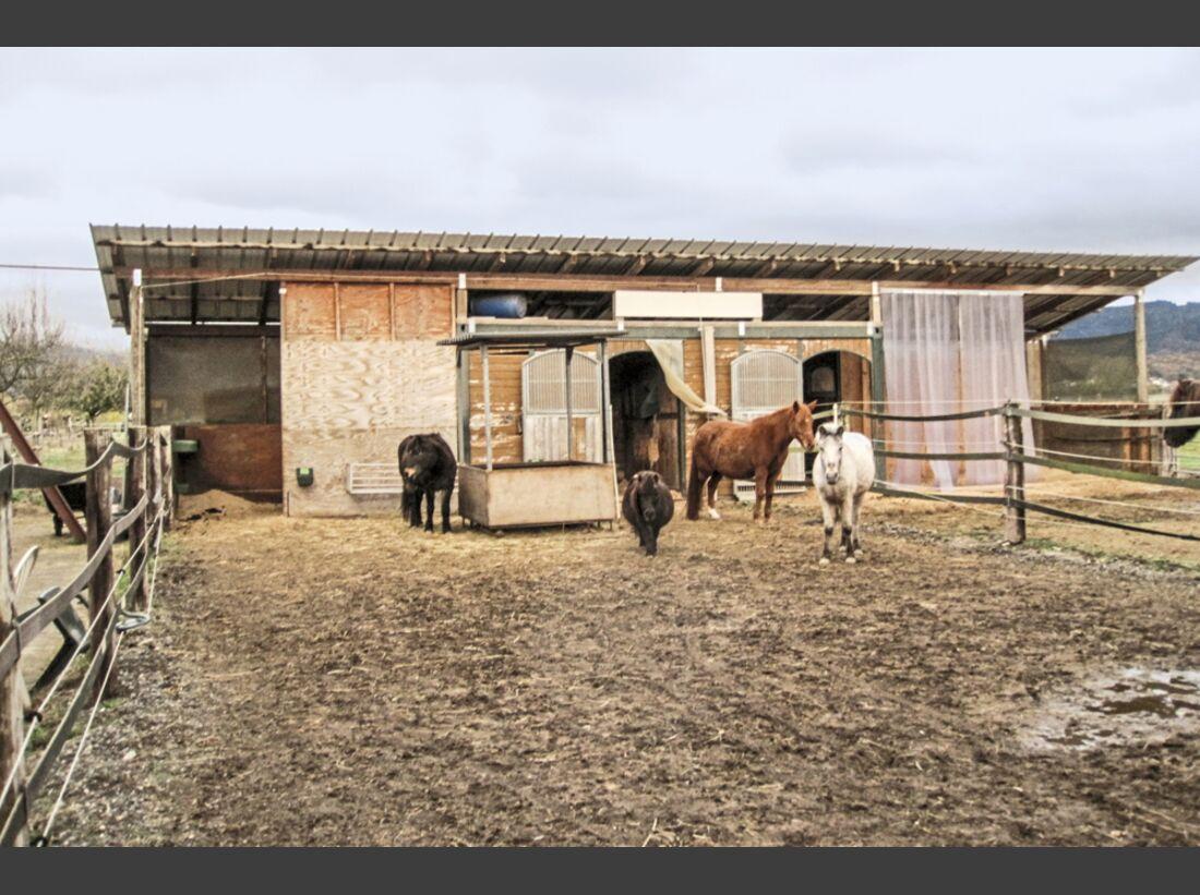 cav-reitschultest-freiburg-022017-reitstall-mueller-offenstall-schulpferde1-floesser (jpg)